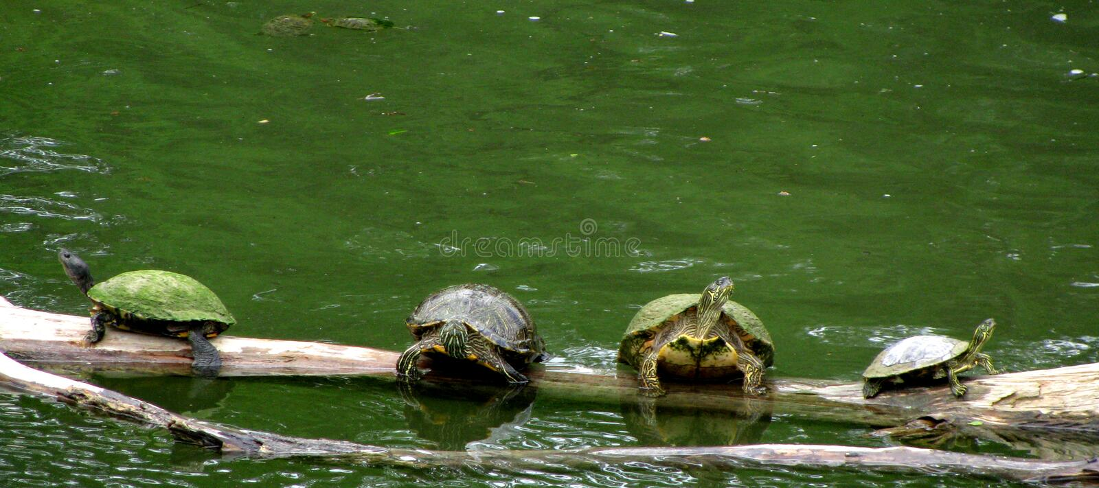 Turtle Party stock photography