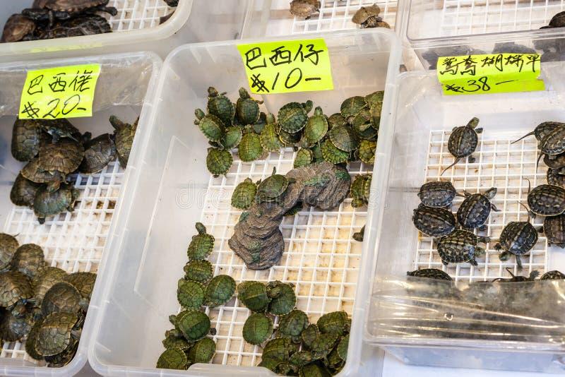 Turtle Pet On Sale At Tung Choi Street, Hong Kong Stock ...