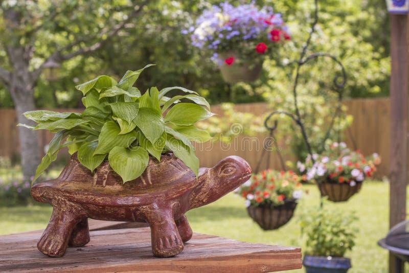 Turtle Planter royalty free stock photo