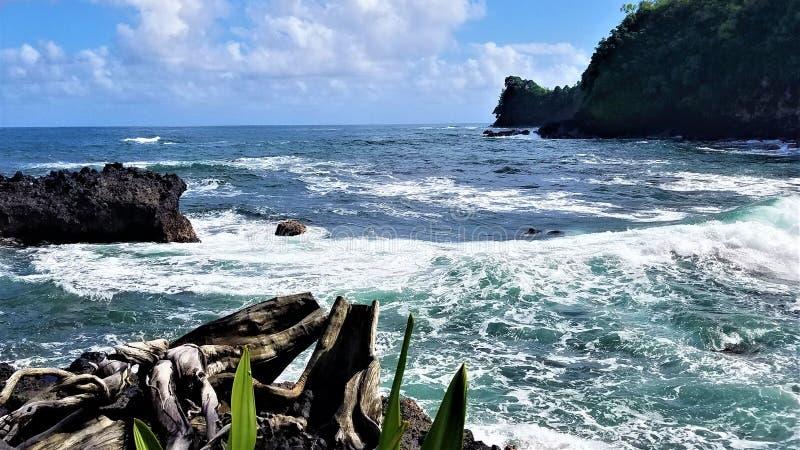 Turtle Point Ocean Vista obraz royalty free