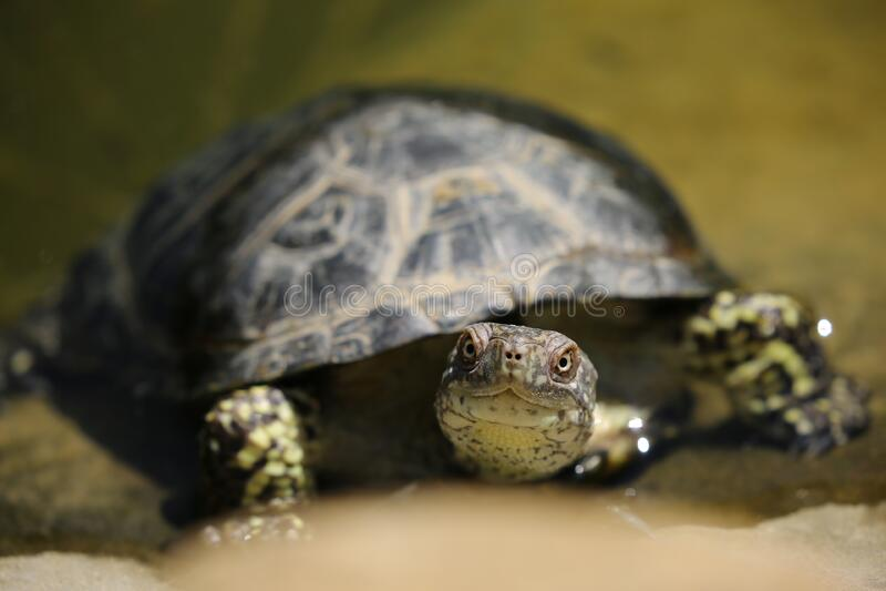 Turtle portrait stock photography