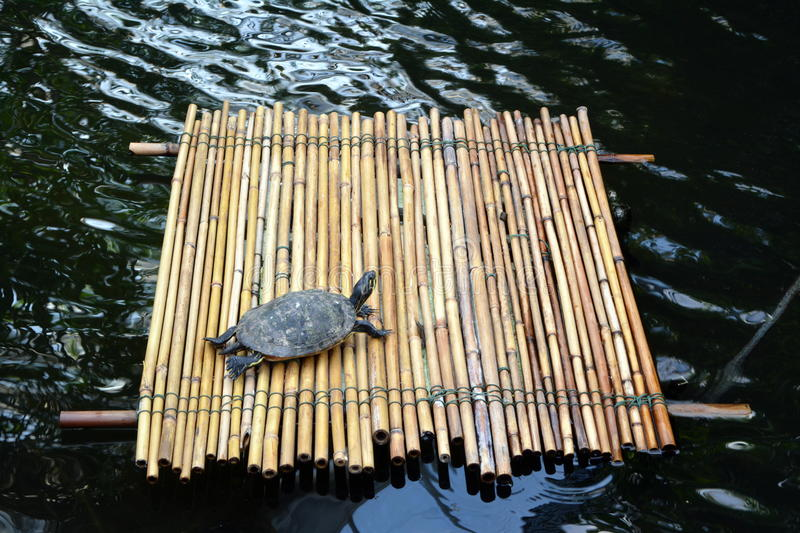 Turtle on a raft in the middle of the lake royalty free stock photo