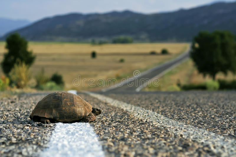 Turtle on the road. Turtle on the asphalt road in Turkey royalty free stock photos