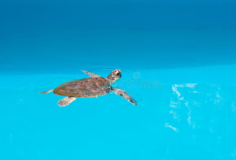 Turtle in the Safari Park. Brijuni. Croatia stock images
