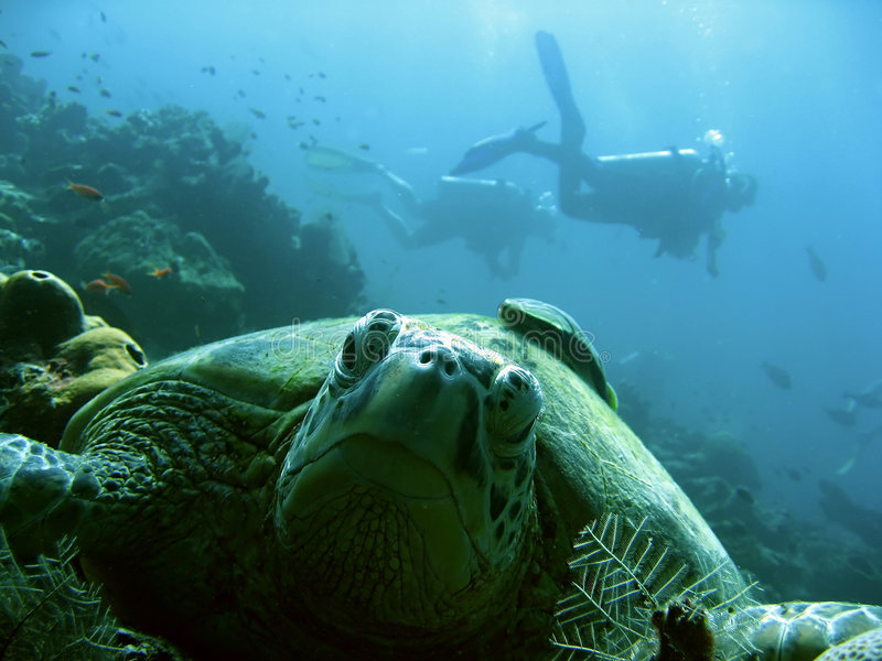 Turtle scuba divers sipadan island coral reef borneo royalty free stock photo