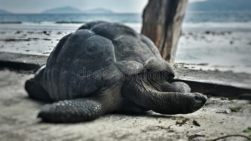 Turtle on seychelles stock images