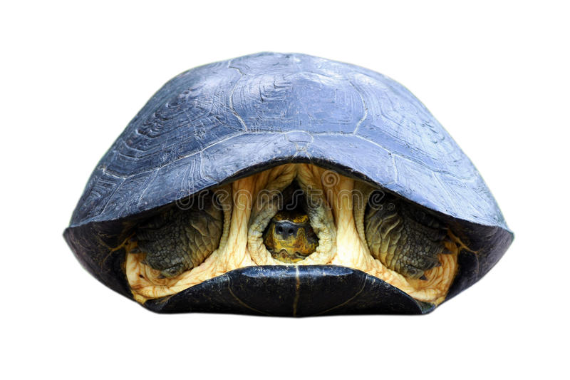 Turtle shell. Background texture macro. Selective focus stock image