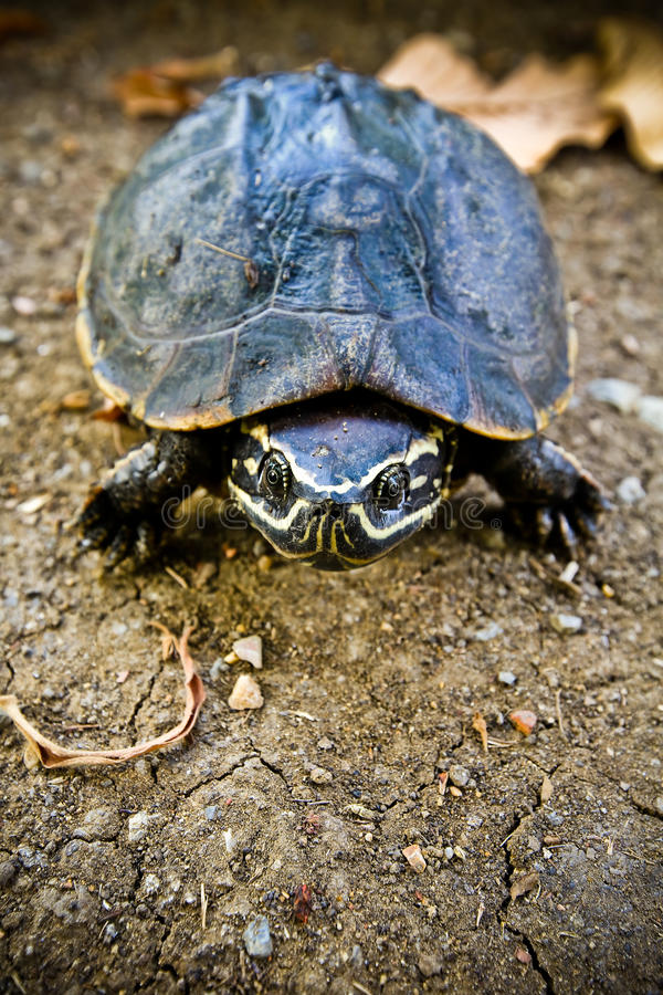 Turtle shell. Background texture macro. Selective focus stock photos