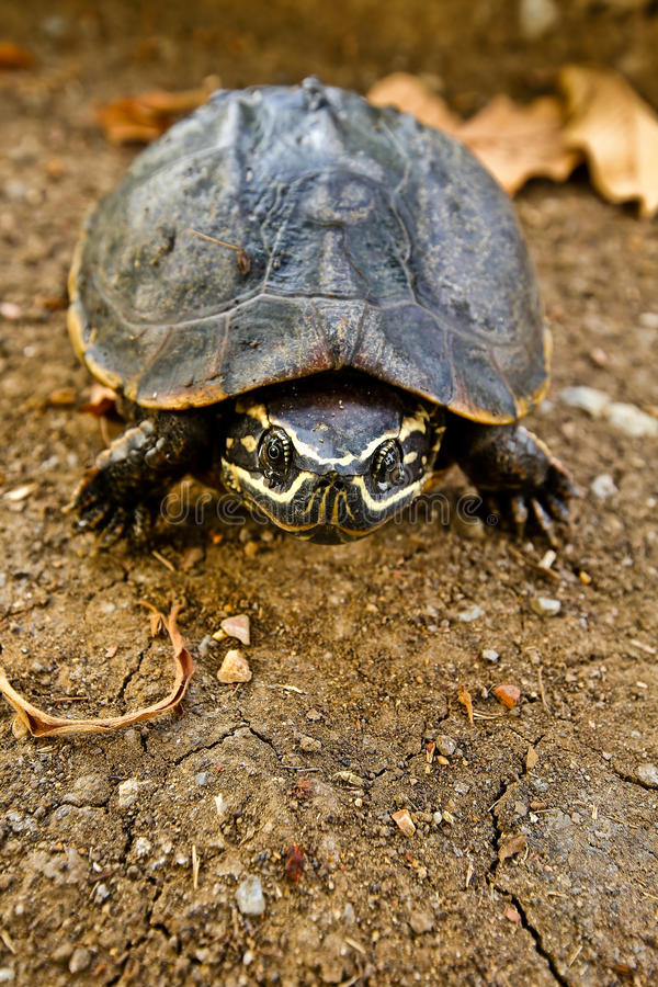 Turtle shell. Background texture macro. Selective focus stock photography