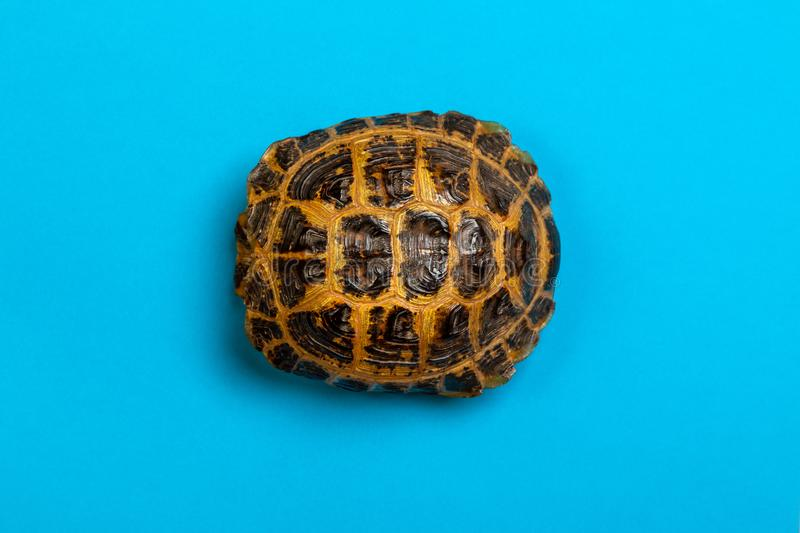 Turtle shell. On blue background royalty free stock photography