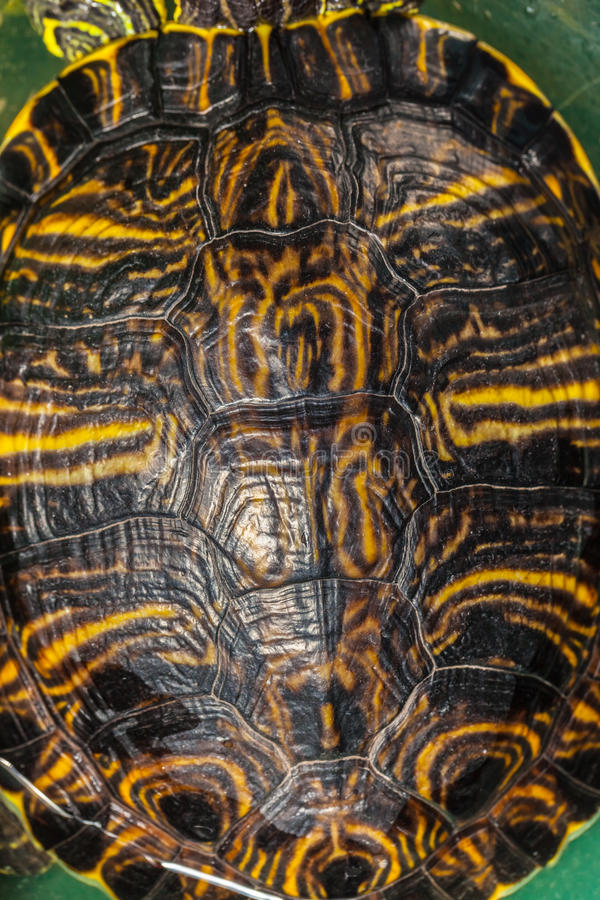 Turtle shell. Close up shot of small tortoise brown shell stock photos
