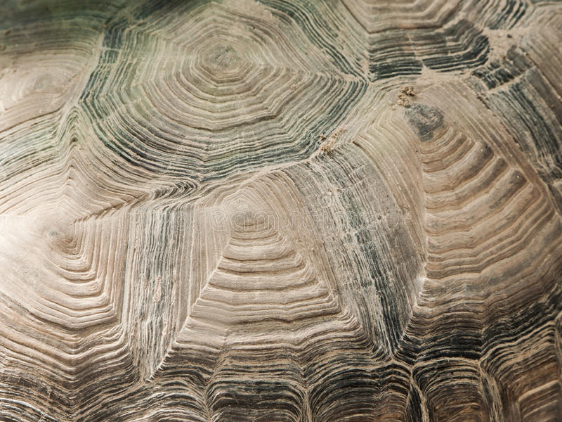 Turtle shell close-up texture. Abystract natural shapes royalty free stock photos