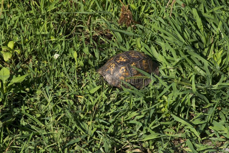 Turtle shell in grass stock photos