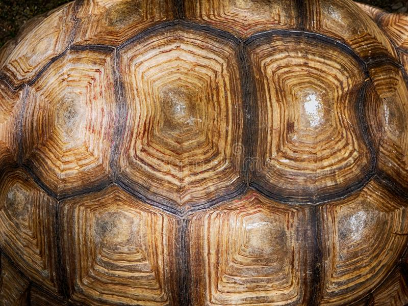 Turtle shell textured and background. Close up of turtle shell textured and background,old Turtle carapace stock photo