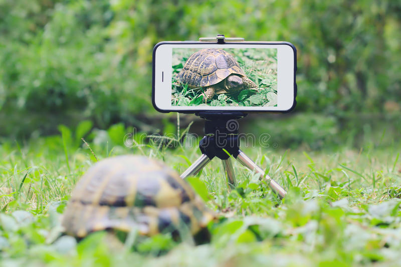 Turtle snaps a selfie. Turtle in a meadow take a selfie with a smartphone on a tripod