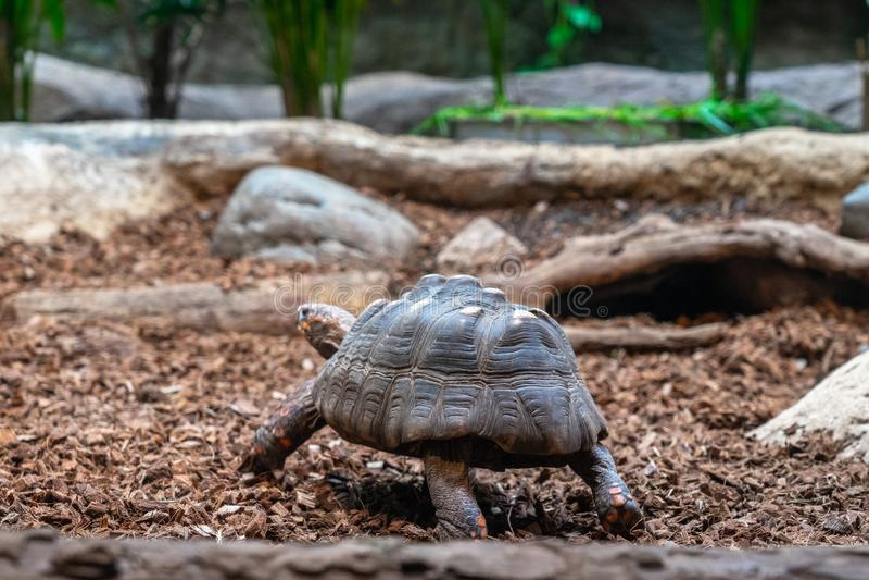 Turtle tortoise terrarium in zoo Barcelona stock photo