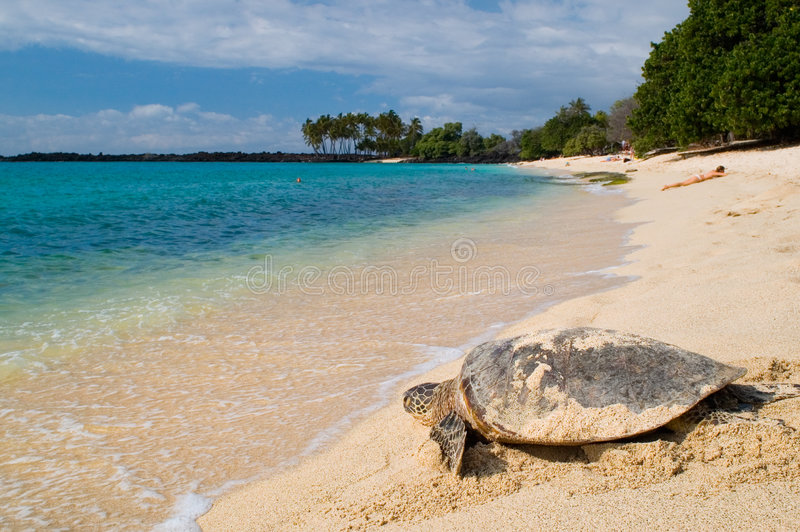 Turtle on the tropical beach royalty free stock photos