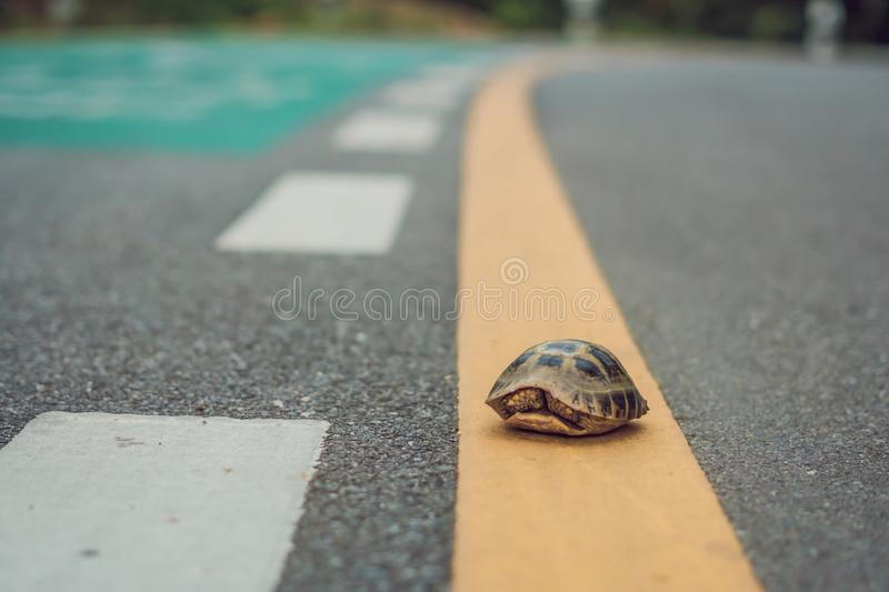 Turtle walking down a track for running in a concept of racing or getting to a goal no matter how long it takes stock image