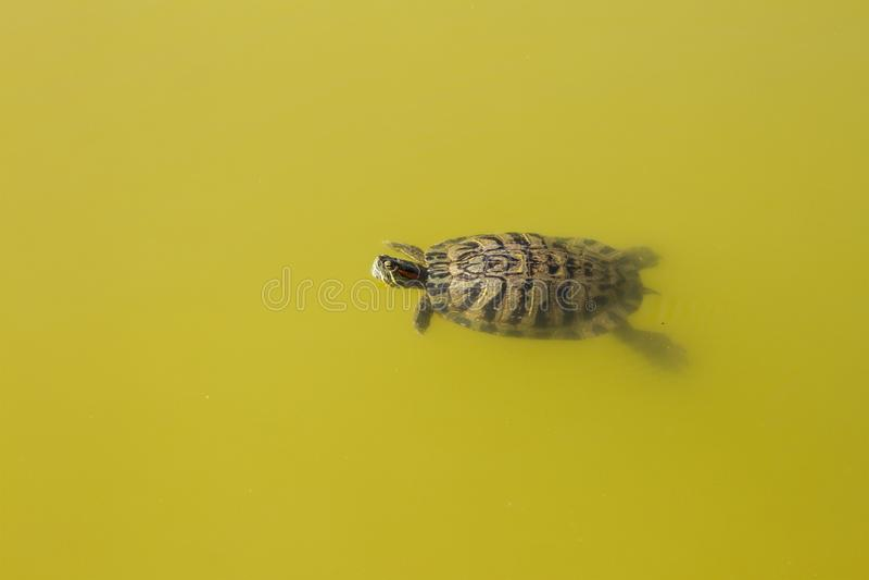 Turtle water animals stock photo