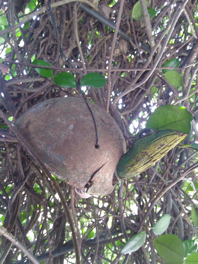 Turtle wind chime in tangled vine of jasmine. With peeking light stock image