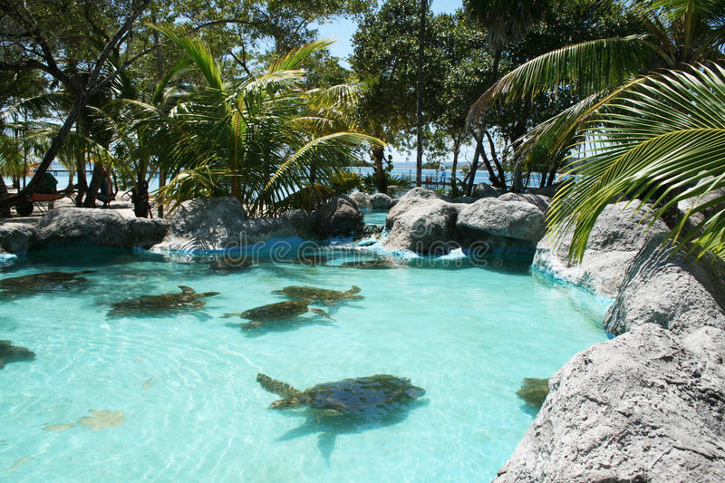 Download Turtles stock photo. Image of tourism, turtles, coral - 23147178