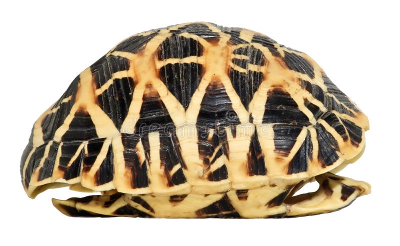 Turtles shell isolated royalty free stock images