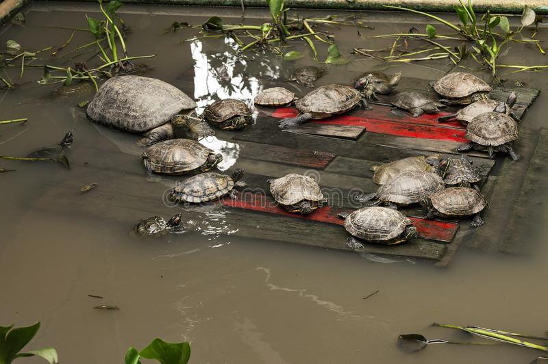 turtles Wat Phra Kaew temple is one of the oldest and most revered Buddhist temples in Chiang Rai. stock images