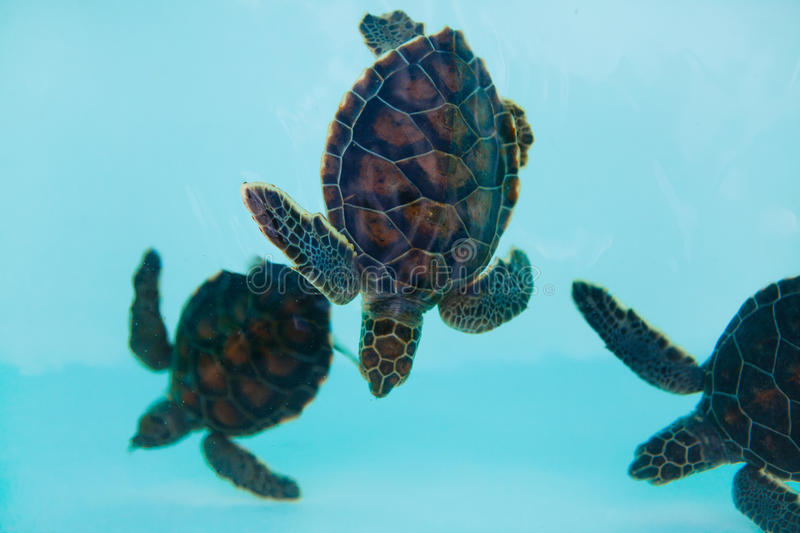 Download Turtles In Water Stock Photo - Image: 27822120