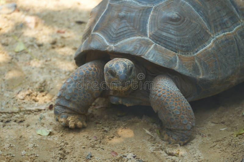 Turtoise stand on sand floor in shady stock photos