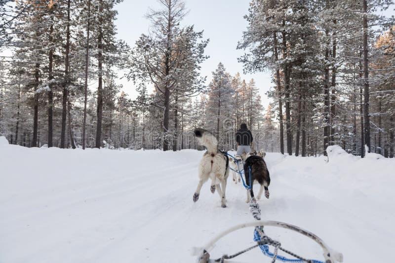 Turyści biega dogsled w Lapland zdjęcia stock
