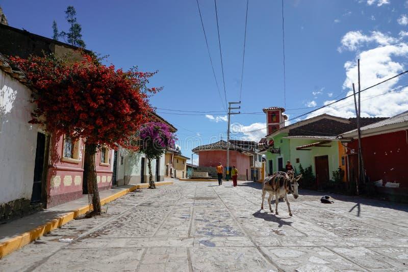 Turyści i osły chodzą puste ulicy Chavin De Huantar w backcountry Andes Peru obrazy stock