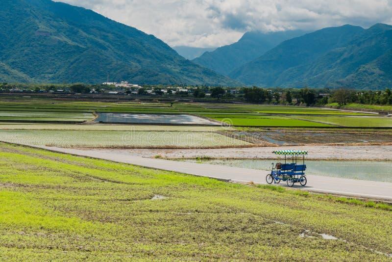 Turyści jadą elektrycznych trójkołowów na śródpolnych drogach Krajobrazowy widok Piękni Rice pola Przy Brown aleją, Chishang, zdjęcia royalty free