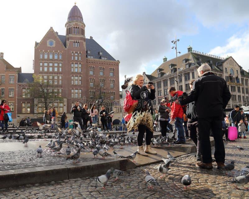 Turyści karmią gołębie w Amsterdam, Holandia zdjęcia royalty free