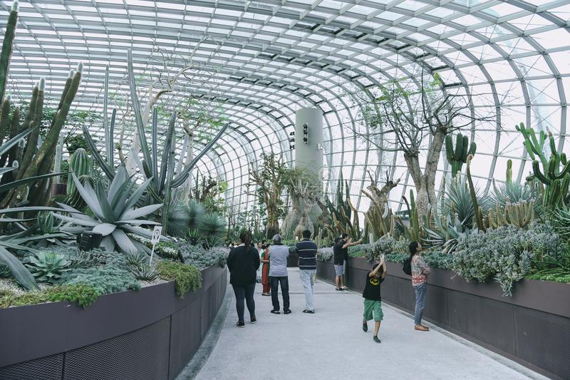 Turystów wewnątrz Inside Obłoczna lasowa kopuła obraz royalty free