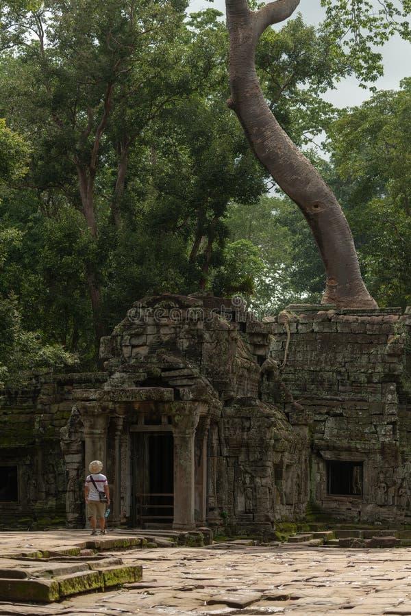 Turysta podziwia drzewnego dorośnięcie nad świątyni wejście fotografia stock