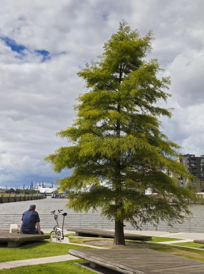 Turysta siedzi na drewnianej ławce i spojrzeniach w kierunku hafencity w Hamburg fotografia royalty free