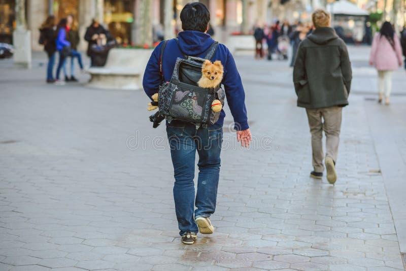 Turysta z psim koszem w Barcelona, Hiszpania obraz stock