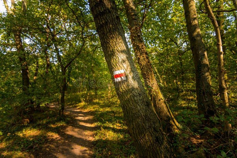 Turysty znak na drzewnej pobliskiej lasowej ścieżce, zielona trawa, drzewa zdjęcia stock