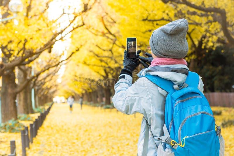 Turystyczna dziewczyna bierze fotografii żółtego ginkgo drzewa zdjęcia stock