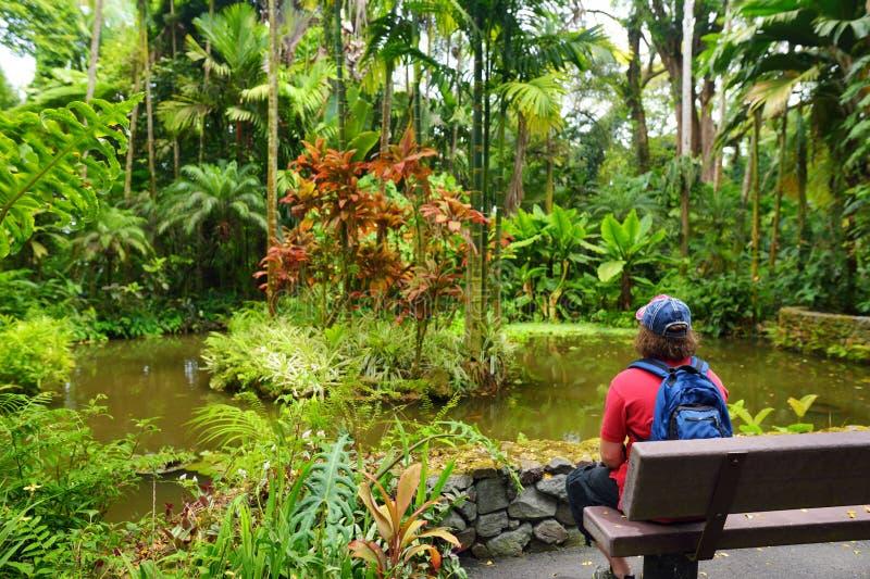 Turystyczna podziwia luksusowa tropikalna roślinność Hawaje Tropikalny ogród botaniczny Duża wyspa Hawaje obraz stock