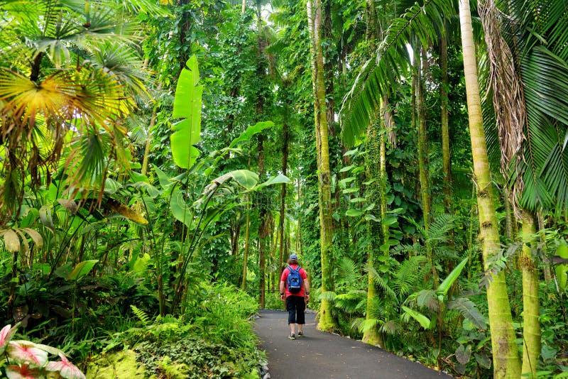 Turystyczna podziwia luksusowa tropikalna roślinność Hawaje Tropikalny ogród botaniczny Duża wyspa Hawaje zdjęcie stock