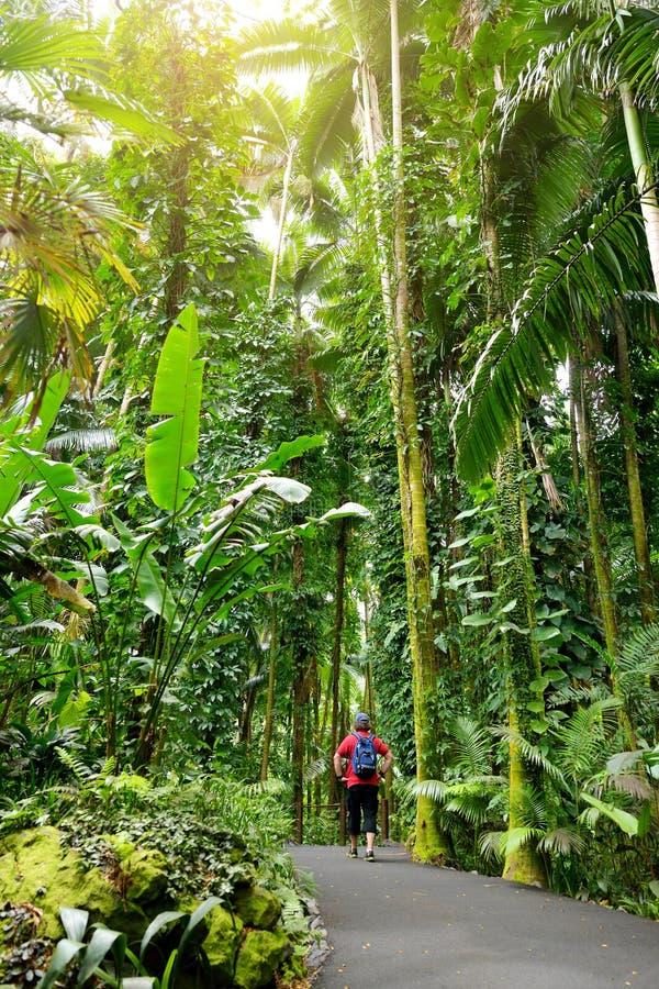 Turystyczna podziwia luksusowa tropikalna roślinność Hawaje Tropikalny ogród botaniczny Duża wyspa Hawaje zdjęcia stock
