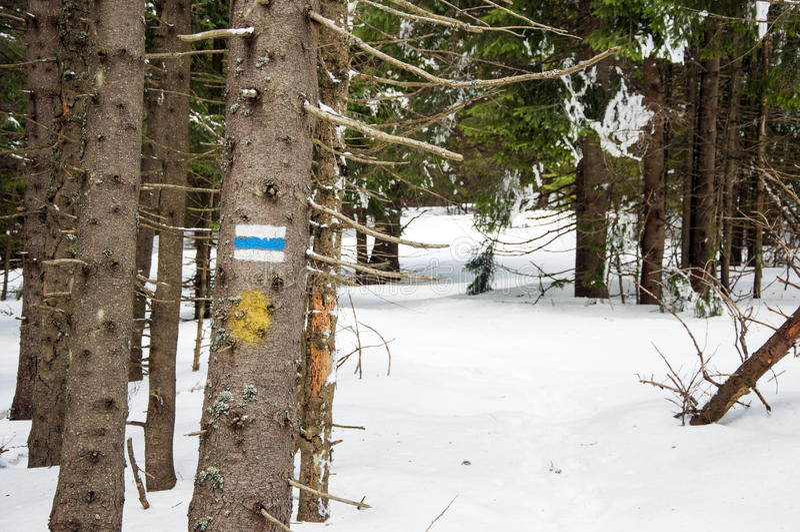Turystyczny śladu znak na drzewie fotografia stock