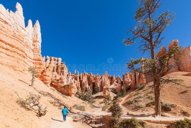 Turystyczny Badający Hoodoos w Bryka jaru parku narodowym, Utah, usa zdjęcie royalty free