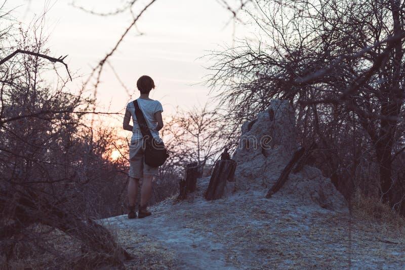 Turystyczny odprowadzenie w krzaku akacja gaju przy zmierzchem i, Bushmandland, Namibia Przygoda i eksploracja w Afryka obraz ton fotografia royalty free