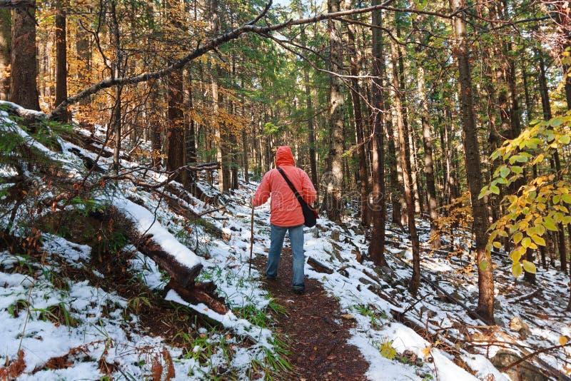 Turystyczny odprowadzenie wzdłuż lasowego śladu obrazy royalty free