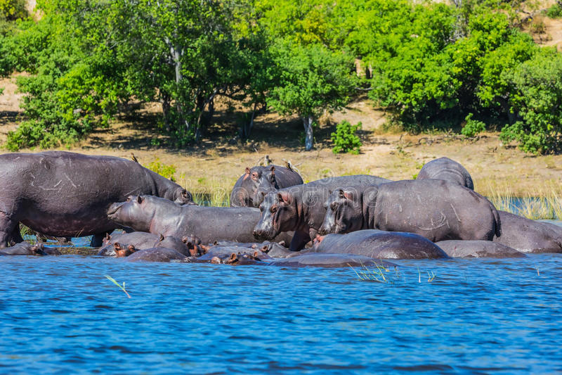Turystyka w Okavango delcie fotografia stock