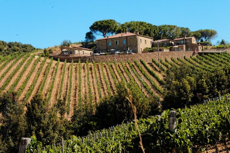 Tuscan αμπελώνας στοκ εικόνες