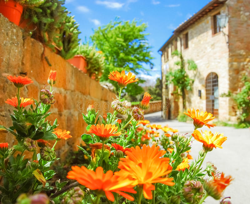 Tuscan Flowers. stock images