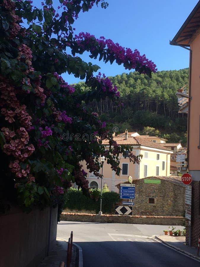 Tuscan gatablommor arkivfoton